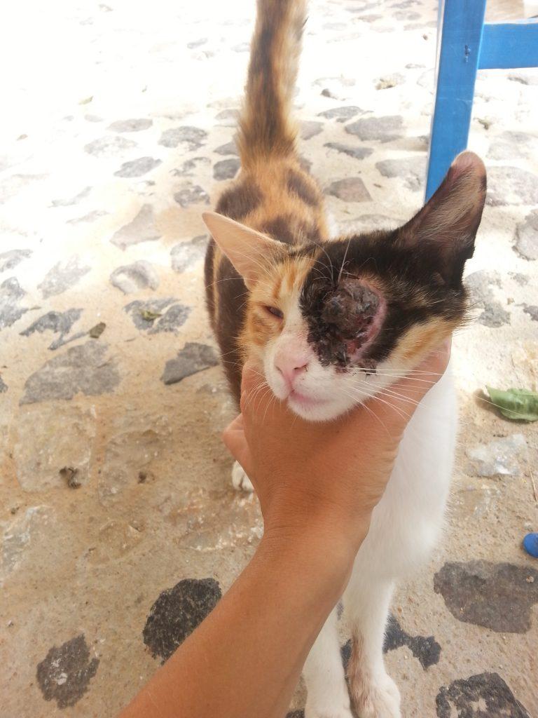 Katze mit Katzenschnupfen