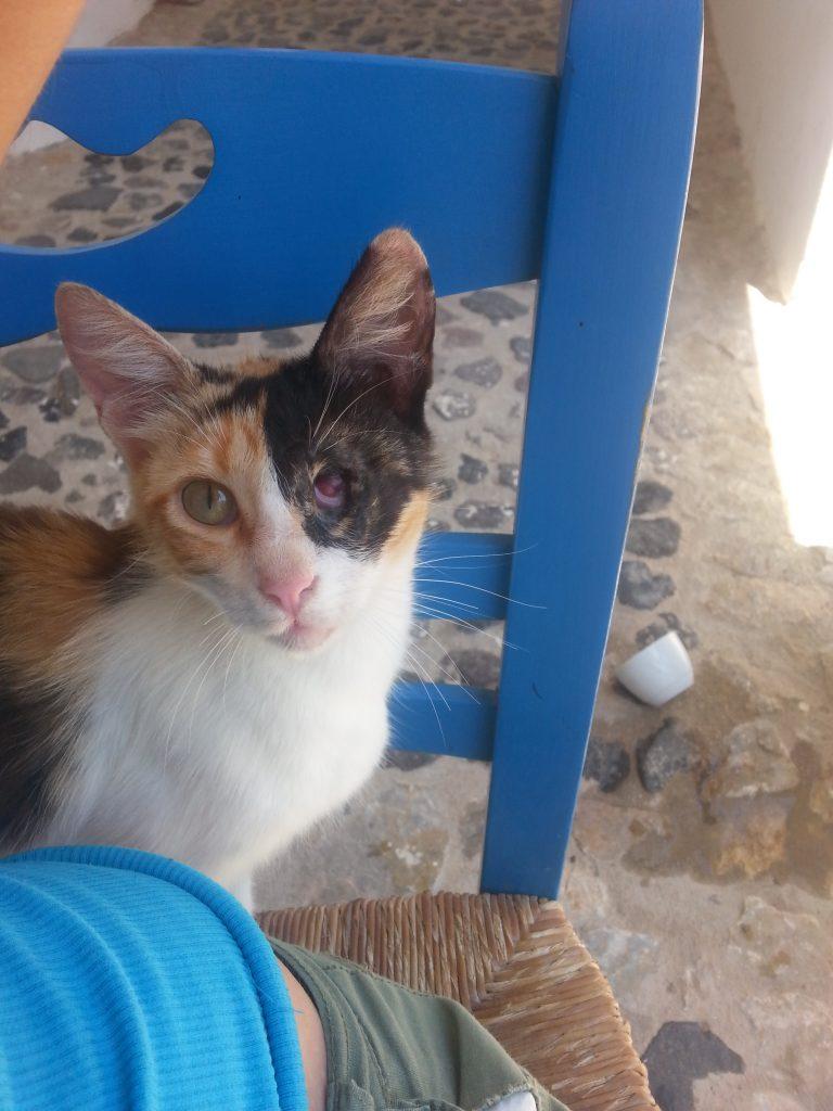 Katze mit verlorenem Auge
