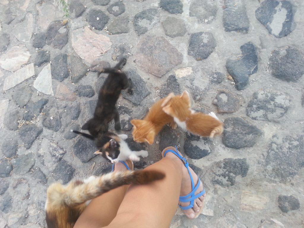 Katzenbabys auf Santorini